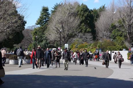 今日は桜とダビンチと動物園と盛り沢山!