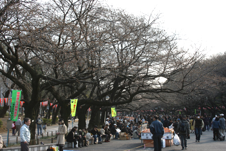上野公園では花見宴会が既にスタート!?3月21日号
