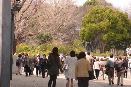 「桜満開の上野公園はお花見日和」をレポート!