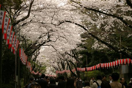 3月最終日の上野公園と桜と宴会の様子~。