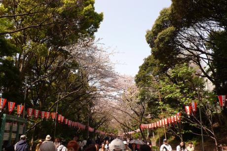 昨日の雨と雷で上野公園のサクラはどうなちゃったの!?