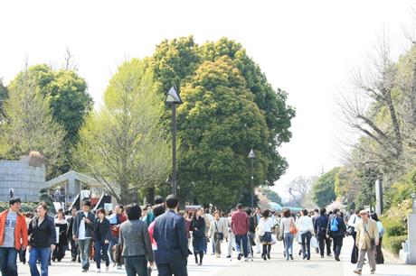 お花見日和の上野公園は今日もオオイリ