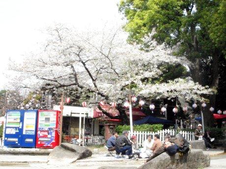お花見スタイルそれぞれ@快晴の上野公園