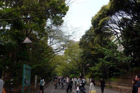 今の上野恩賜公園…うえの桜まつりその後