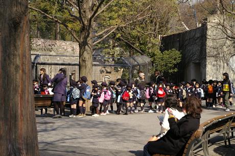 上野動物園猛獣捕獲訓練・・・