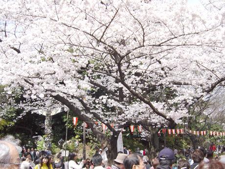 3/29 お昼の上野公園!