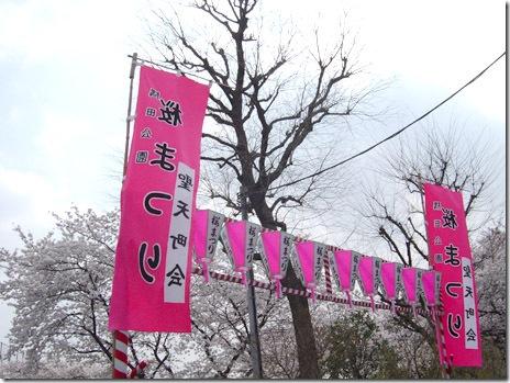 3/28 いよいよ隅田川もお花見開始!