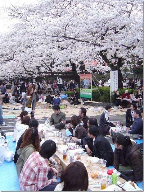 3/30 日曜日、サクラ満開墨田公園の様子は?