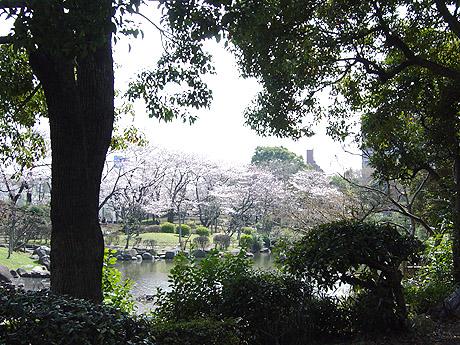 3/26 隅田公園のベスト桜散策スポットを見つけた!