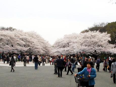 4/2 上野公園の風景~お花見~