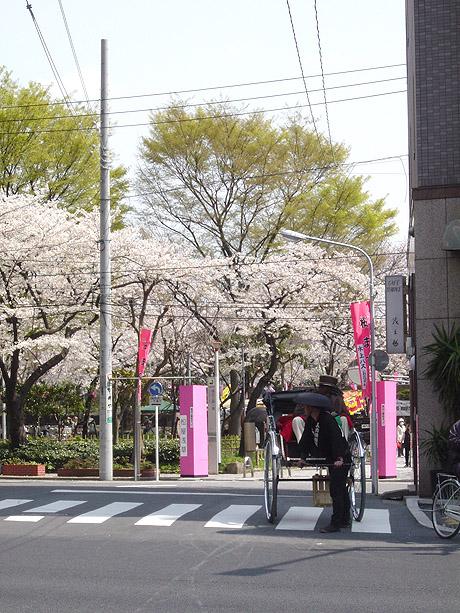 4/3 桜が舞う墨田公園で大盛り上がり!
