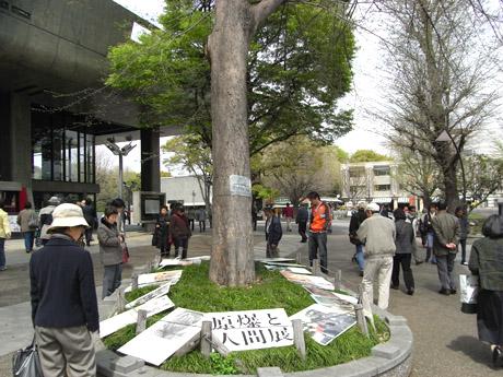 4/9 イチヨウが咲いた!上野公園