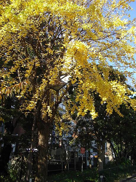 上野公園で初冬(?)の散策