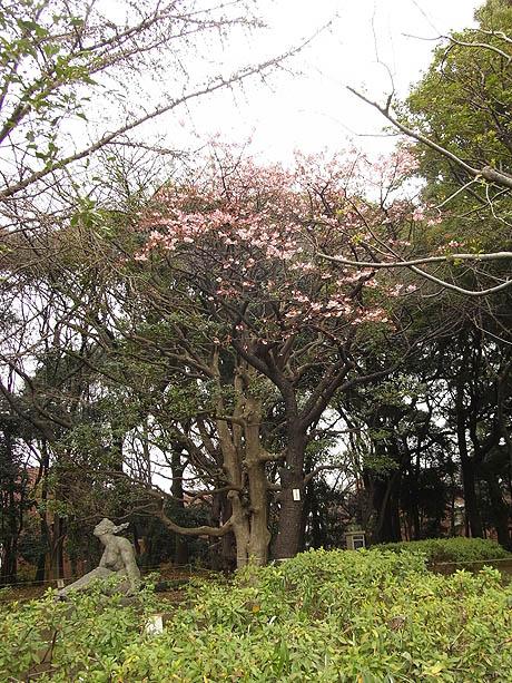 一足お先にお花見!? 上野恩賜公園