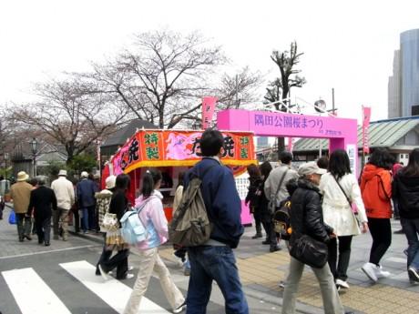花見頃を迎えた?隅田公園の桜開花状況