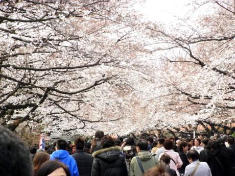 お花見シーズン最初の日曜日。その時、上野公園は!