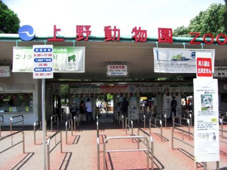 気になる上野動物園の中で食事情報!レストランランチ