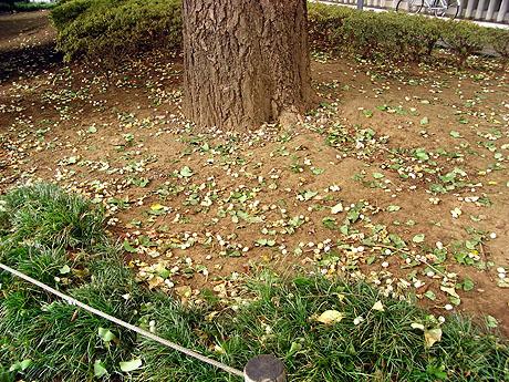 季節を彩る上野公園