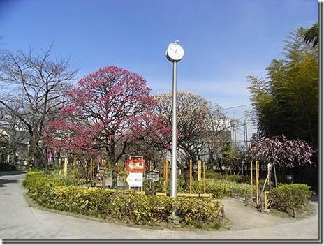 隅田公園梅まつり (2.20.土~2.21.日)