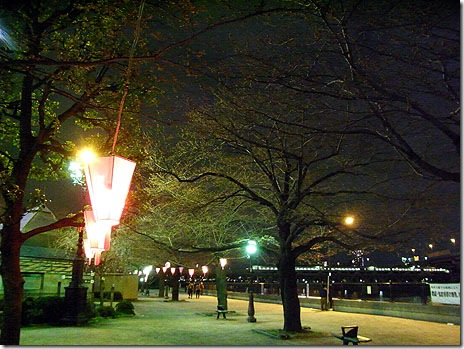 隅田公園・よっ!さくら!(夜桜)