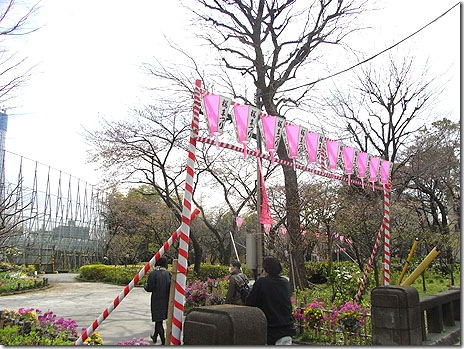 隅田公園もお花見スタート!