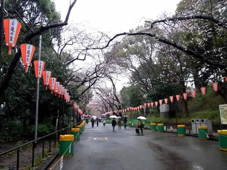桜にまつわるイベントあれこれ@上野公園
