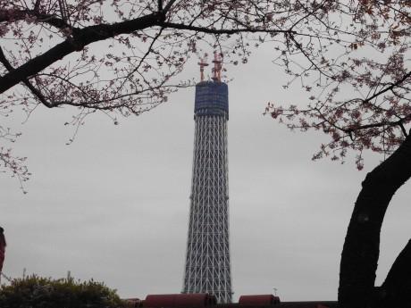 寒いお花見だけど、スカイツリーも楽しめた隅田公園
