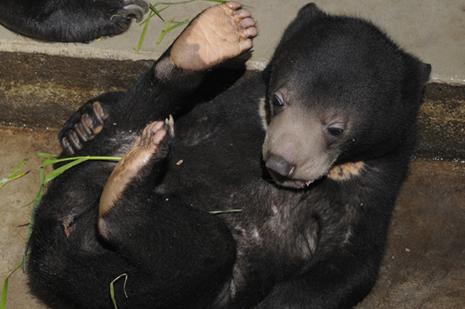 上野動物園 マレーグマの赤ちゃん公開!他イベント情報