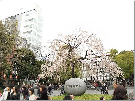 満開の上野公園!花見は最高潮♪