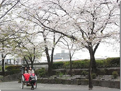 桜は散り初めが一番綺麗!隅田公園