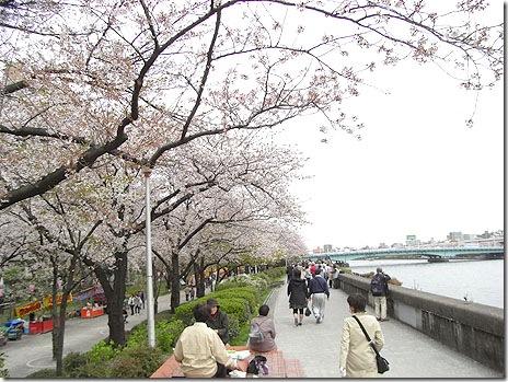 今週末はお花見に最高!?@隅田公園
