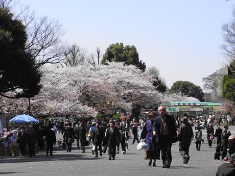 お花見日和でにぎわう上野公園!