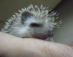 上野動物園 動物の赤ちゃん次々誕生!
