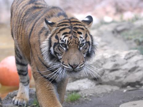 【上野動物園】おもしろ発見!クイズラリー「よるの動物・ひるの動物」【2010/8/10~8/13】