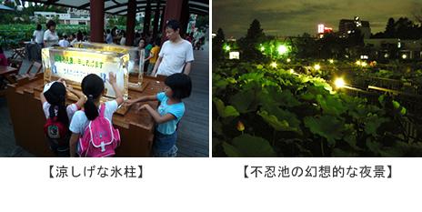 真夏の夜の動物園【2010/8/10(火)~8/16(月)】