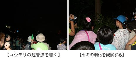 上野動物園 「セミとコウモリの観察会」参加者募集他