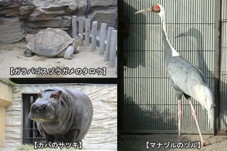 長寿動物のお祝い看板の設置【2010/9/15(水)~9/20(月・祝)】