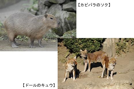 動物慰霊祭【2010/9/23(木・祝)】