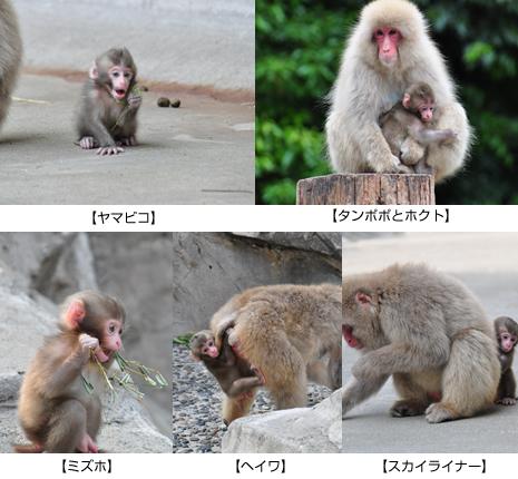上野動物園 子ザルの名前が決まりました