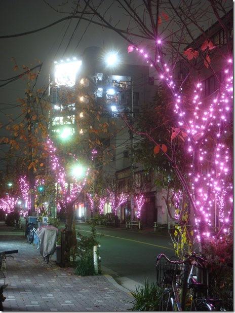 冬の一葉桜まつり イルミネーション【2010/11/15~1/25】