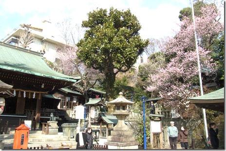 咲き始めたカンザクラ&上野公園 博物館