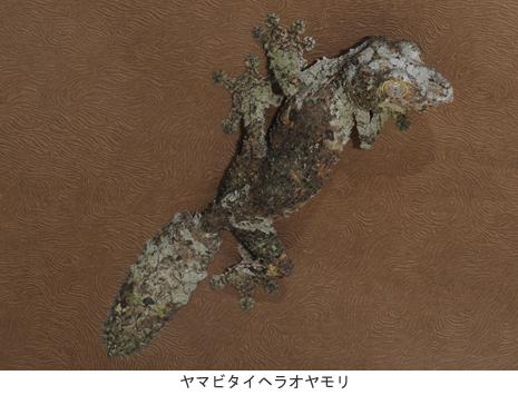 上野動物園 特別展示「両生爬虫類鑑 まもる」開催