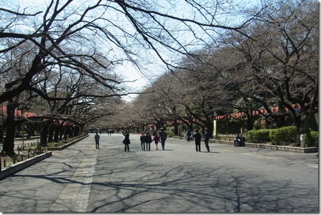 お花見している人もちらほら@上野公園