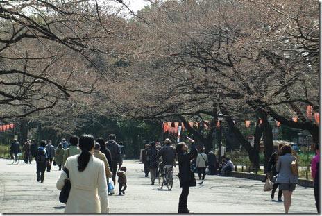 素晴らしき枝垂れ桜!@上野公園