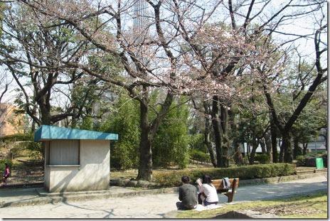 隅田公園(墨田区側)のサクラの様子
