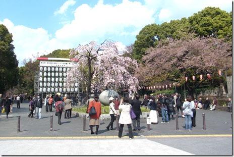 咲き始めたソメイヨシノ@上野公園