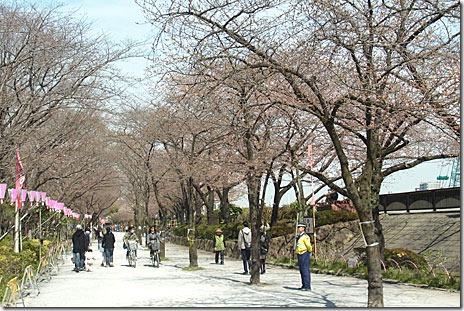 4月1日隅田公園のサクラの様子は?