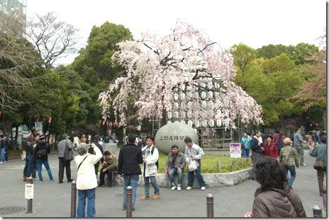 上野公園は花見客が多数&パンダ情報