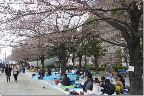 寒い中お花見をする人が多数@隅田公園(台東区側)