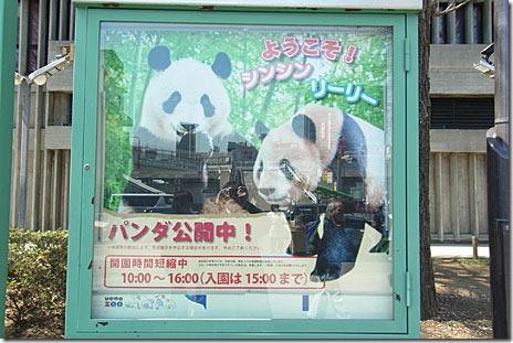 上野動物園が無料!パンダ待ちがすごい事に・・